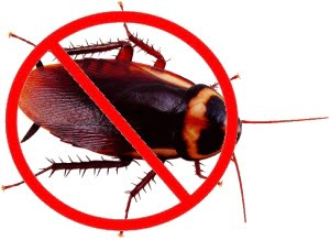 Get rid of cockroaches with boric acid