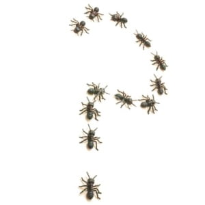 Which type of ants do you have?