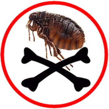 How to get rid of fleas with boric acid
