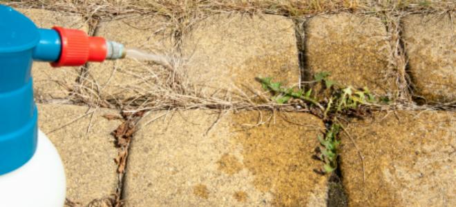 Kill weeds with boric acid